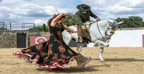 SPANISH REINING AND SPANISH PURE BREED